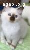 Cuccioli disponibili da fine giugno 2016